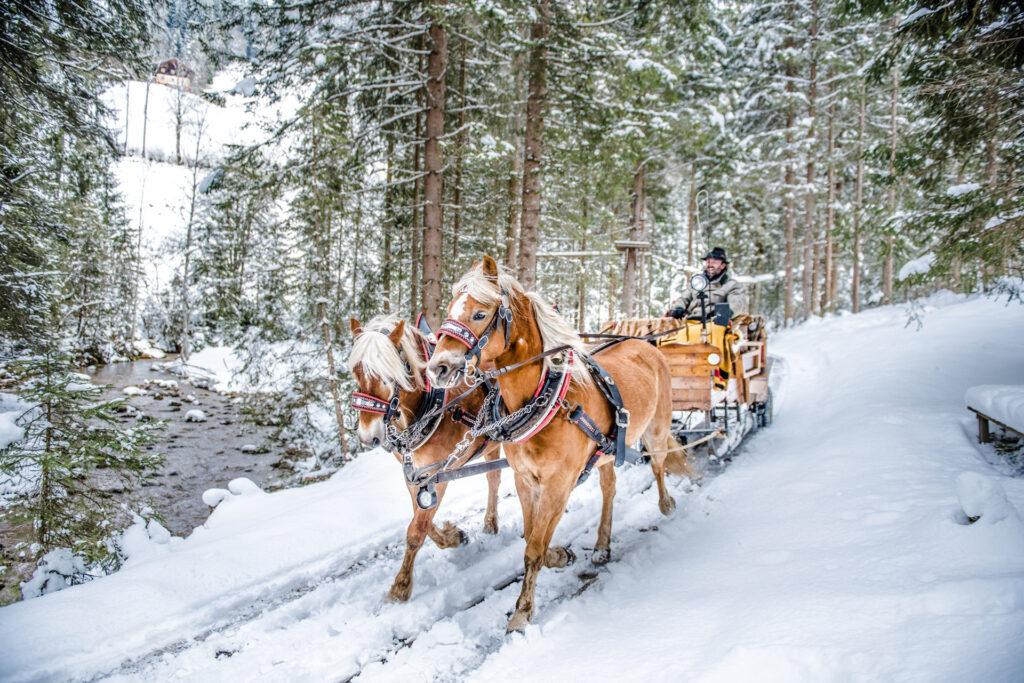 Pferdeschlittenfahrt durch verschneiten Wald